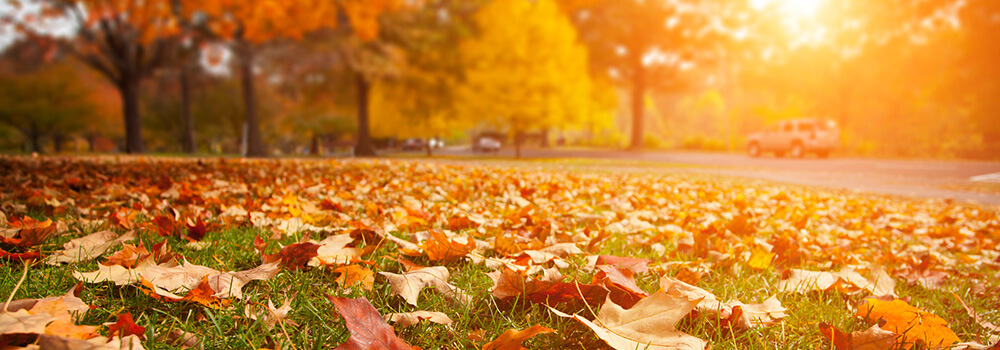 fall-autmun-leaves-trees