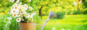 summer-flowers-daze